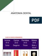 Morfologia dentaria 1