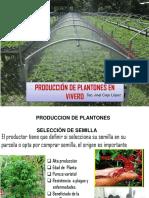 Producciòn de Plantones de Cafe en Vivero