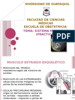 272575308 Sistema Muscular Embriologia
