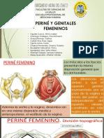 Perine y Genitales Femeninos