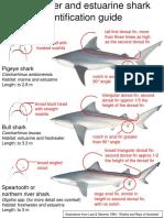FreshwaterandEstuarineSharkIdentificationGuide.pdf