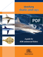 Identifying-sharks-and-rays.pdf