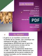 losperros-130629192620-phpapp01