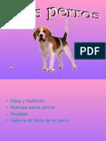 perros-110509055943-phpapp01