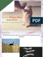 diapositivasdegatos-130506162537-phpapp01