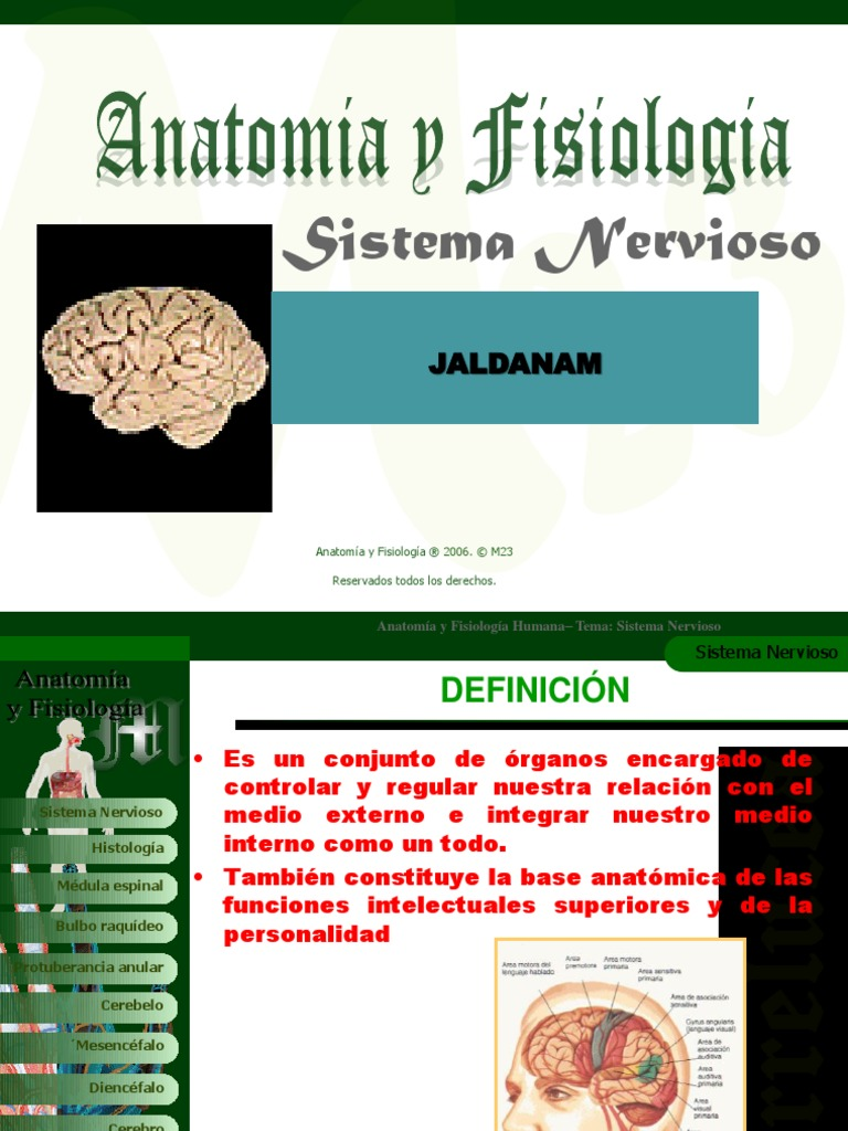 Anatomia Y Fisiologia Sistemanervioso 100812174725 Phpapp02 4