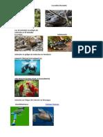 2 Flora y Fauna en Peligro de Extincion de Centro America