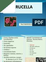 BRUCELLA-1