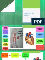 EKG y Potencial de Acción