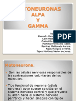 Motoneuronas Alfa y Gamma