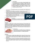 Las Carnes y Sus Propiedades
