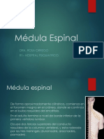 Medula Espinal Neuroanatomia