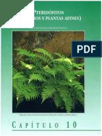 Pteridofitos