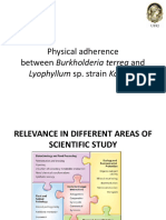 Physical Adherence Between Burkholderia Terrea and Lyophyllum Sp