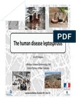 The Human Disease Leptospirosis