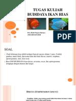 Tugas Kuliah Budidaya Ikan Hias