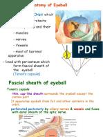 Gross Eye Anatomy