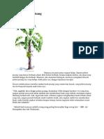 Filosofi Pohon Pisang