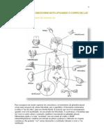 Como o Sistema Endócrino