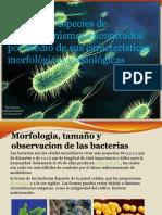 Identificar Especies de Microorganismos Encontrados Por Medio Desg