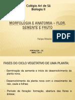 Morfologia e Anatomia Flor Semente
