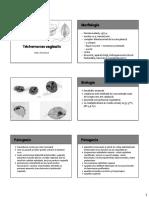 P03_Trichomonas.pdf