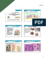 Especializações Da Membrana Plasmática