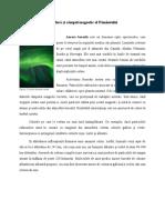 Aurora Polara Si Campul Magnetic Al Pamantului