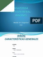 1 Anatomía Del Sistema Renal