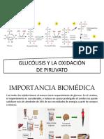 Glucólisis y La Oxidación