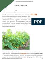 Asociación de Cultivos en El Huerto - La Huertina de Toni