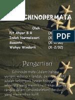 Filum Echinodermata Kelompok 5 X2