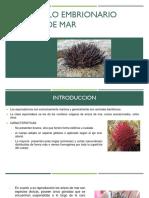 DESARROLLO-EMBRIONARIO (1)