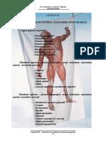 Anatomia topografica a membrului superior si inferior