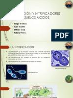 Nitrificación y Nitrificadores en Suelos Ácidos