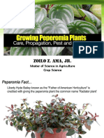 Growing Peperomia Report 2018_Ama