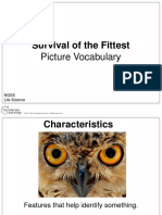 ngss 3 explain survivalofthefittest picturevocabulary