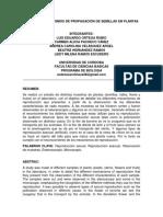 informe desarrollo semillas