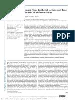 Diferenciación de las células epiteliales.pdf
