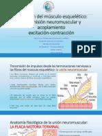 4. Excitacion Neuro Musc Fisio Final