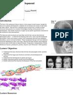 2015ANAT2341 Lecture 11 - Head Development