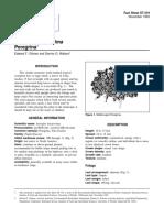 jatropha integerrima.pdf