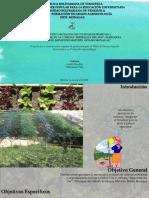 Tesis Asociación y Rotación de Cultivos