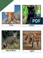 25 Imagenes Animales Salvajes Con Nombre