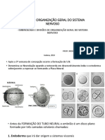 AULA - embriologia do SN.pptx