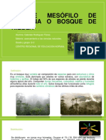 Bosque Mesófilo de Montaña o Bosque de Niebla