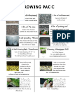Growing Wheatgrass.pdf