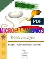 Clasificacion Microorganismos