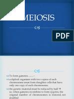 3. Meiosis