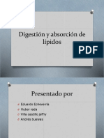 Digestion y Absorcion de Lipidos-1[1]